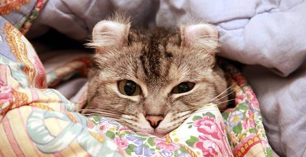 быстро уснуть, если не хочется спать